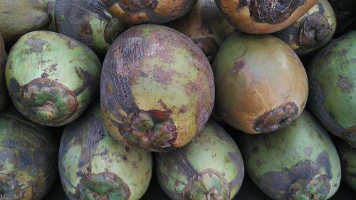 Tender_coconuts_of_Tamilnadu.jpg